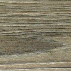 9801-Ель серебристая